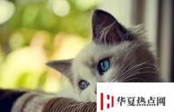 生活小知识:猫咪咳嗽怎么办?猫咪咳嗽的解决办法