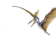 生活小知识:为什么说翼龙是卵生的?